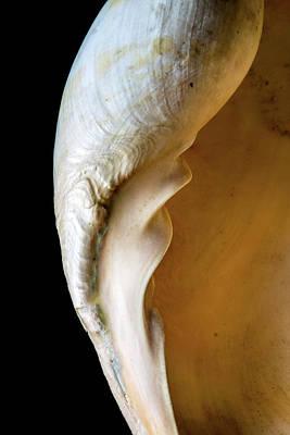 Melo Amphora Art Print