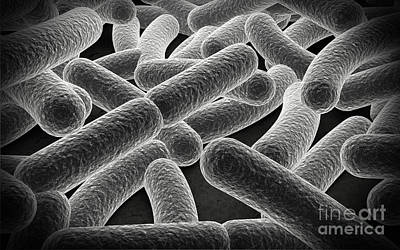 Microscopic View Of Bacilli Bacteria Print by Stocktrek Images