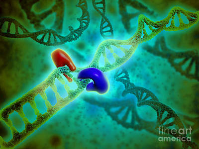 Digital Art - Microscopic View Of Dna Binding by Stocktrek Images