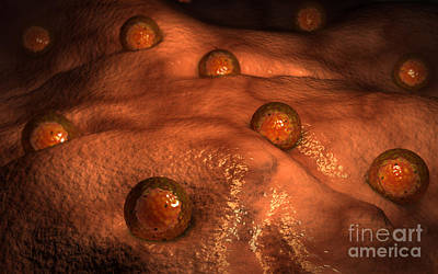 Microscopic View Of Ovules Art Print by Stocktrek Images