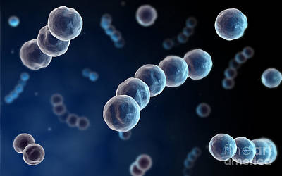 Microscopic View Of Streptococcus Art Print by Stocktrek Images