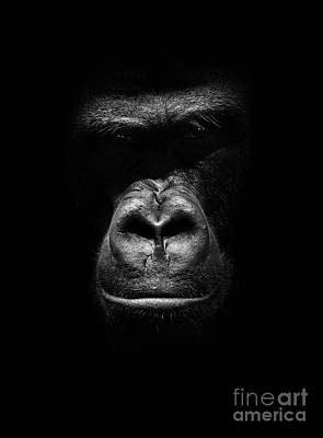 Photograph - Mighty Gorilla by Jaroslaw Blaminsky