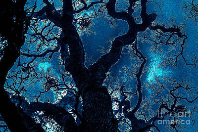 Photograph - Mighty Oak by Allen Sindlinger