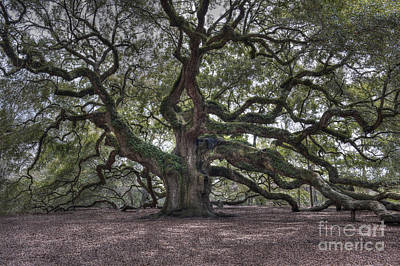 Photograph - Mighty Live Oak Tree On James Island by Dale Powell