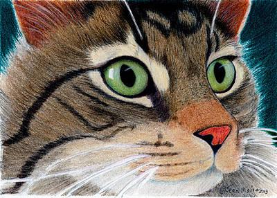 Coon Cat Digital Art - Miles  by Jean Marie Economen