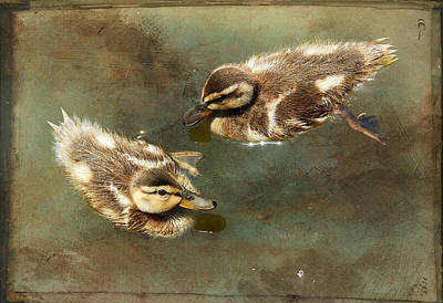 Mini Quackers Art Print by Fraida Gutovich