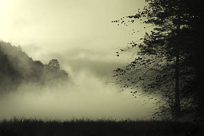Photograph - Misty Morning by Cindy Rubin