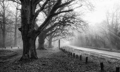 Photograph - Misty Rays by Shirley Mitchell