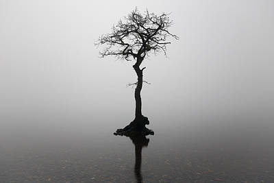 Photograph - Misty Tree by Grant Glendinning