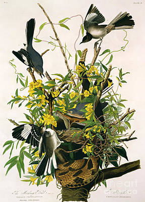 Serpent Painting - Mocking Birds And Rattlesnake by John James Audubon