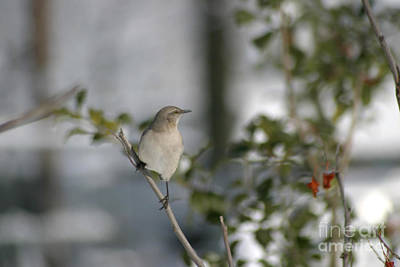 Photograph - Mockingbird by Living Color Photography Lorraine Lynch