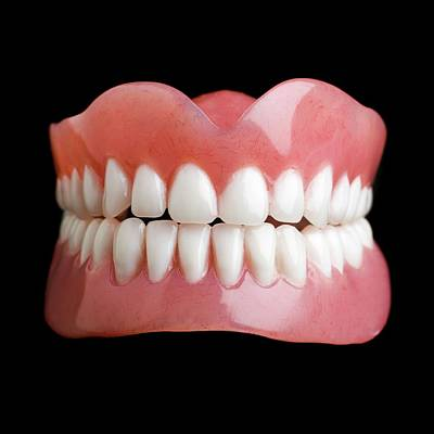 Front View Photograph - Model Of Human Teeth by Science Photo Library