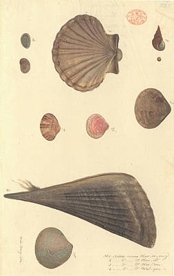 Algal Photograph - Molluscs by Natural History Museum, London