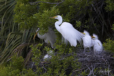 Birds Rights Managed Images - Mom and the Twins Royalty-Free Image by Phill Doherty