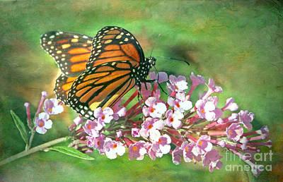 Photograph - Monarch Butterfly by Elizabeth Winter