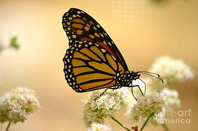 Photograph - Monarch by Johanne Peale
