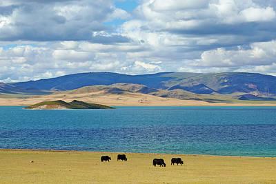 Yak Wall Art - Photograph - Mongolia,  Zavkhan Province, Khar Nuur by Tuul & Bruno Morandi