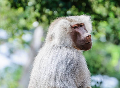 Photograph - Monkey by John Johnson