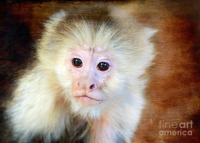 Photograph - Monkey by Trina  Ansel