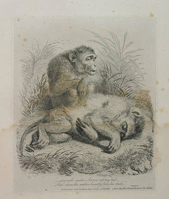 Landseer Wall Art - Photograph - Monkeys by British Library