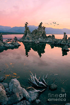 Photograph - Mono Lake by Jill Battaglia