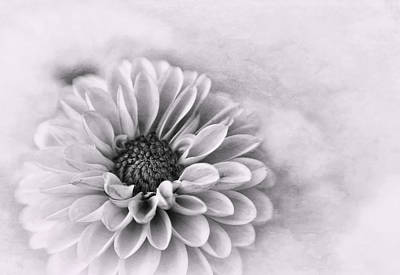Photograph - Monochrome Dahlia  by David and Carol Kelly