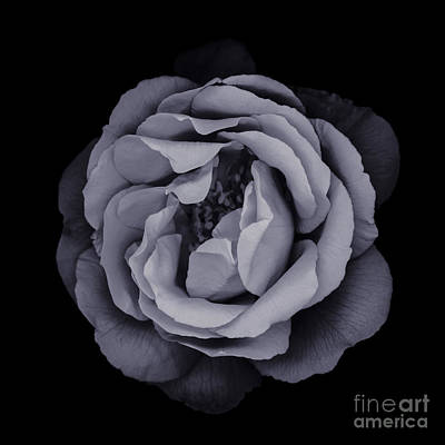 Flower Photograph - Monochrome Rose by Oscar Gutierrez