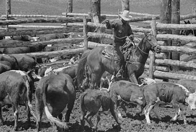 Working Cowboy Photograph - Montana Roundup, 1939 by Granger