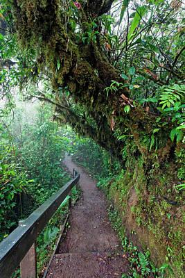 Monteverde Cloud Forest Reserve, Costa Art Print by Susan Degginger
