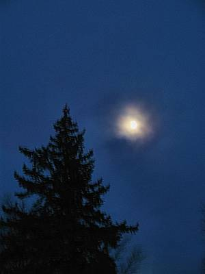 Moon Beyond The Spruce Art Print