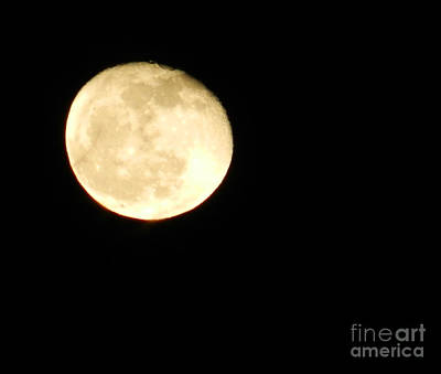 Photograph - Moonglow by Annlynn Ward