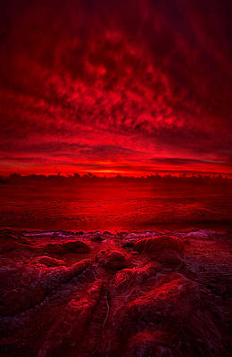 Red Leaves Snow Wall Art - Photograph - More Than A Memory by Phil Koch