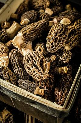 Pine Cones Photograph - Morel Mushrooms by Aberration Films Ltd