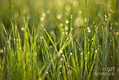 Photograph - Morning Dew by Bernadett Pusztai