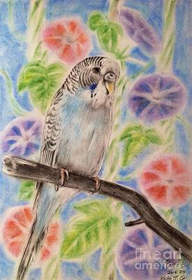 Parakeet Drawing - Morning Glory And Parakeet by Keiko Olds