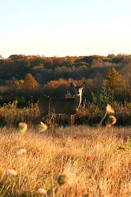 Photograph - Morning Grazing   by Neal Eslinger