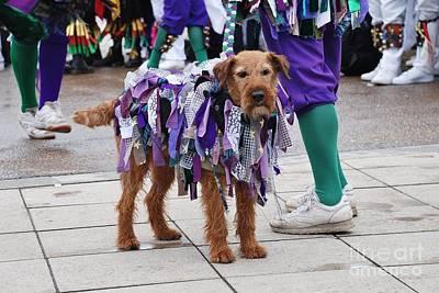 Photograph - Morris Dancers Dog Hastings by David Fowler