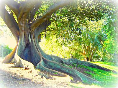 Morton Bay Fig Tree Art Print