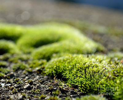 Photograph - Moss Close-up by Ioanna Papanikolaou