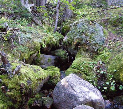 Photograph - Moss Covered Creek by Thomas Samida