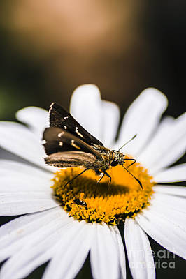 Photograph - Moth Insects On A Bright And Lush Garden Flower by Jorgo Photography - Wall Art Gallery