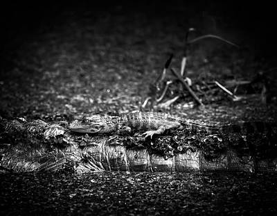 Alligator Photograph - Mother And Baby by Mark Andrew Thomas