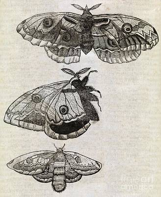 Moths, 17th Century Artwork Art Print by Middle Temple Library