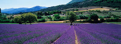 Provence Photograph - Mountain Behind A Lavender Field by Panoramic Images