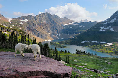 Photograph - Mountain Goats by Thomas And Pat Leeson