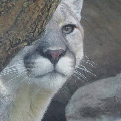 Mountain Lion Digital Art - Mountain Lion Painterly by Ernie Echols