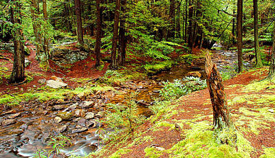 Mountain Stream With Hemlock Tree Stump Art Print