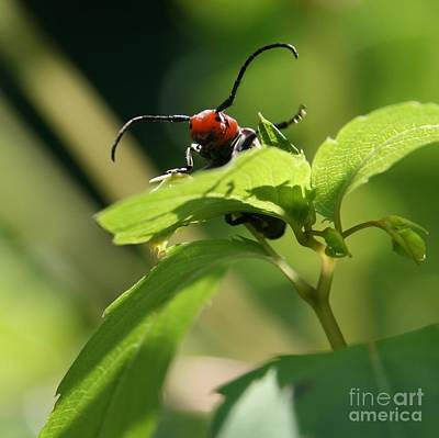 Bug Photograph - Mountains To Climb by Neal Eslinger
