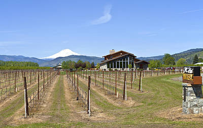 Tasting Photograph - Mt Hood Winery Oregon. by Gino Rigucci