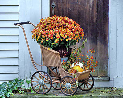 Photograph - Mums In A Buggy by Janice Drew